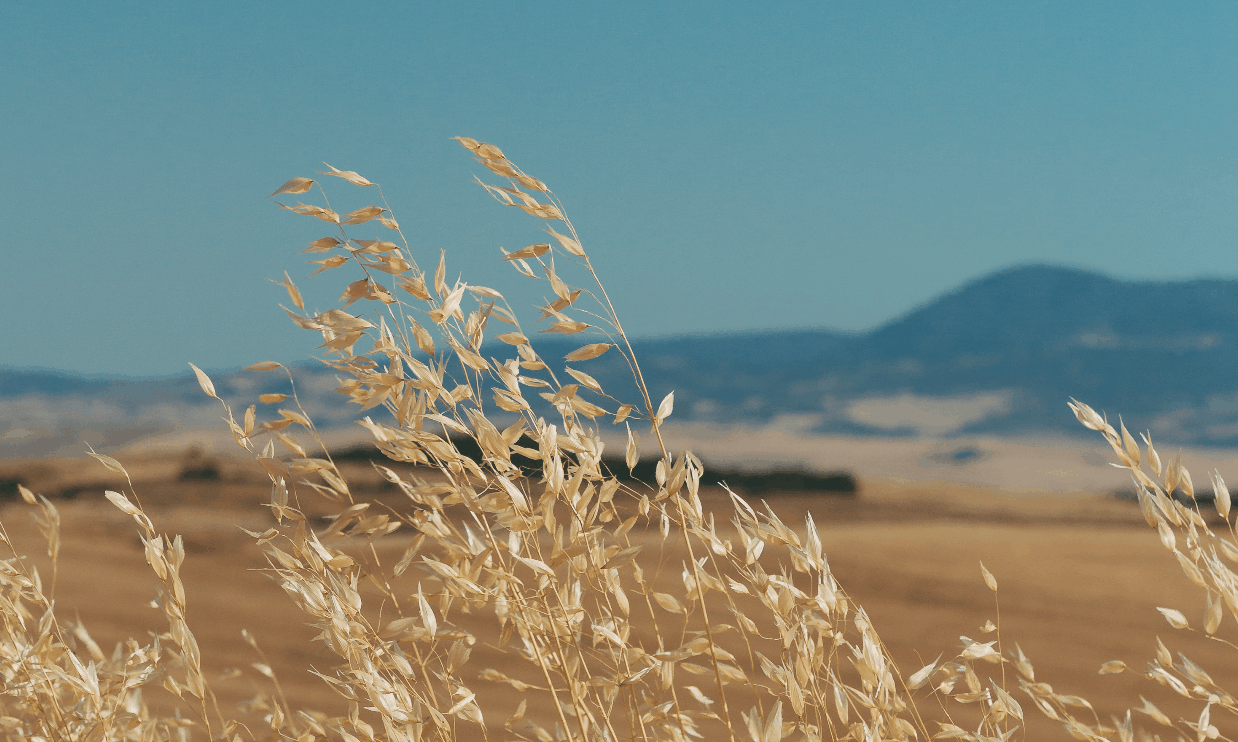 wheat-sustainable-farm-cover