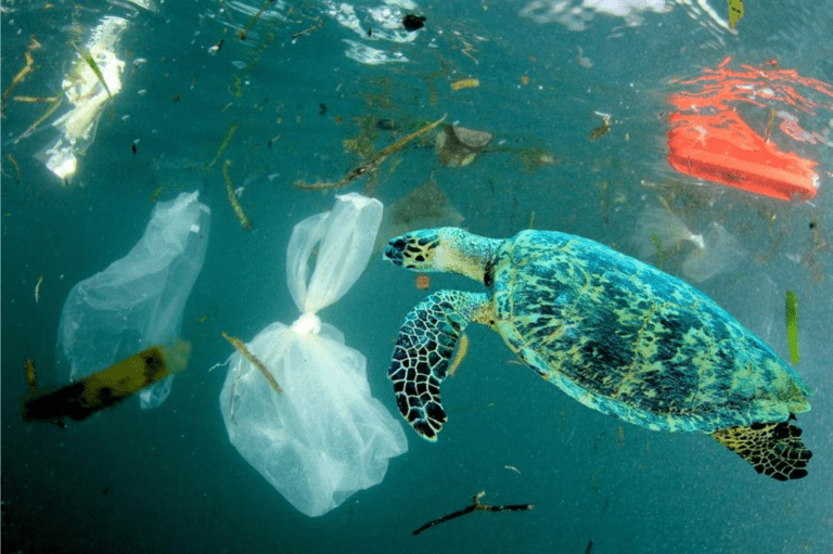 sea-turtle-swimming-in-plastic-polluted-water